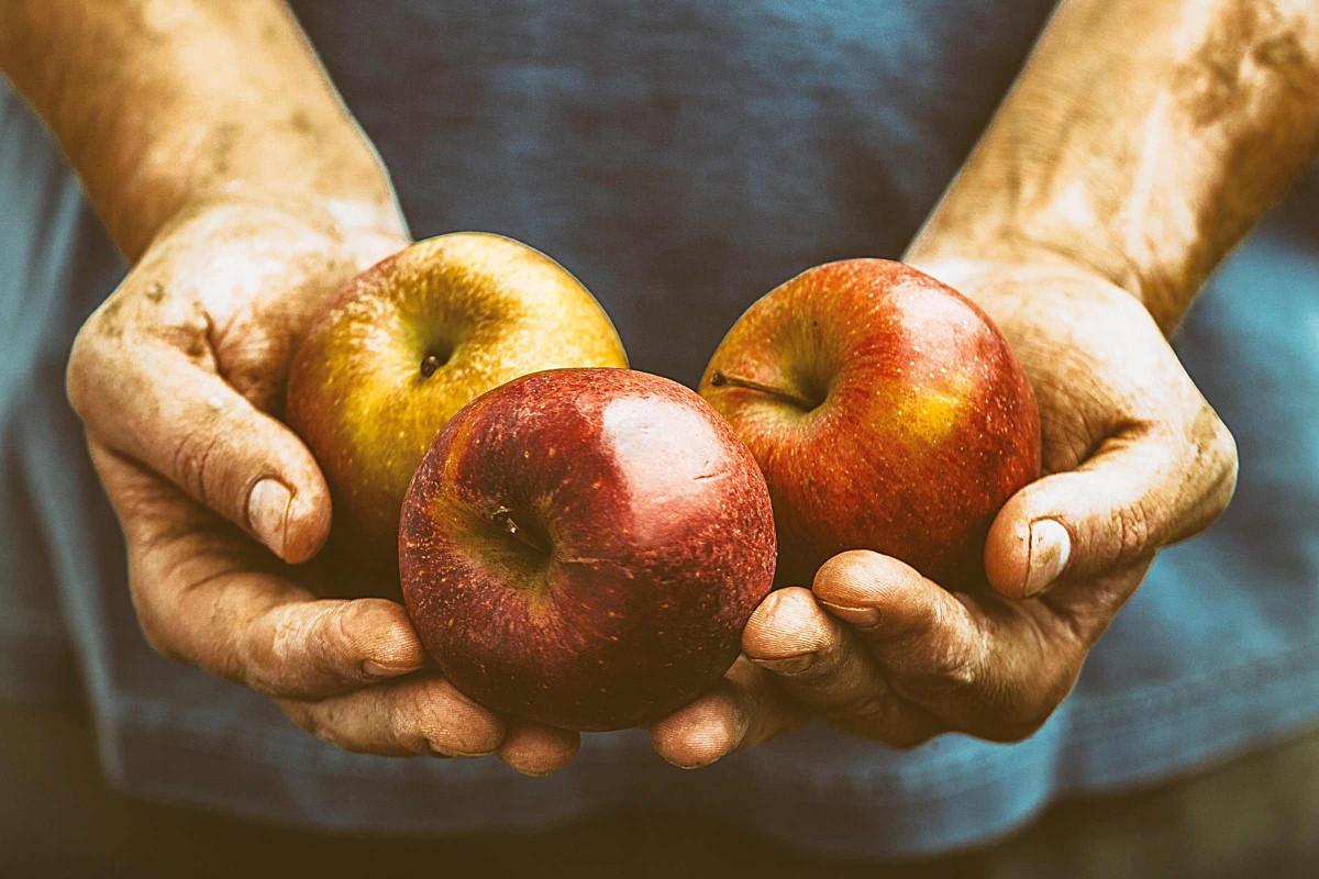 vremea recoltei de fructe colorate