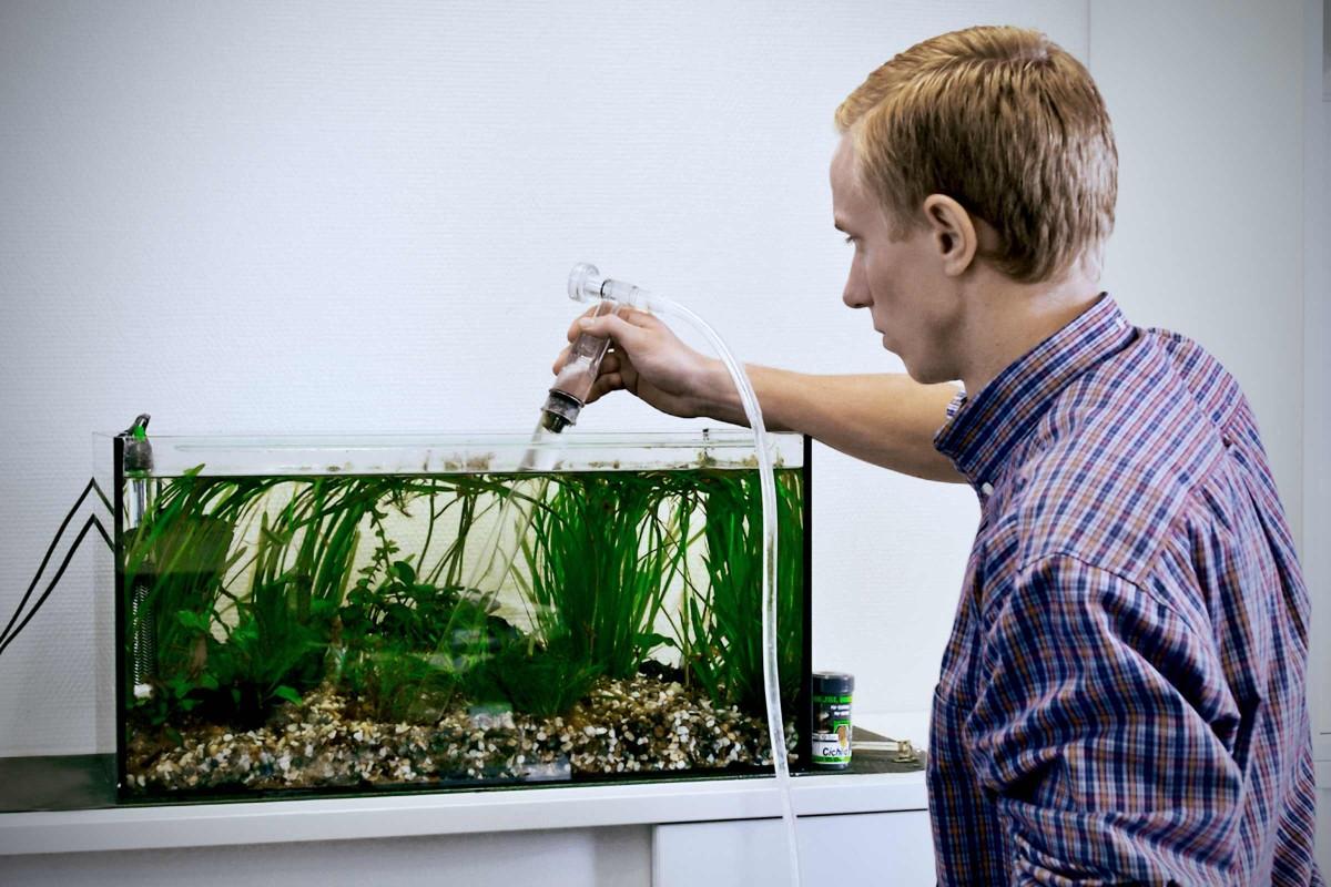 Aquarium pflegen