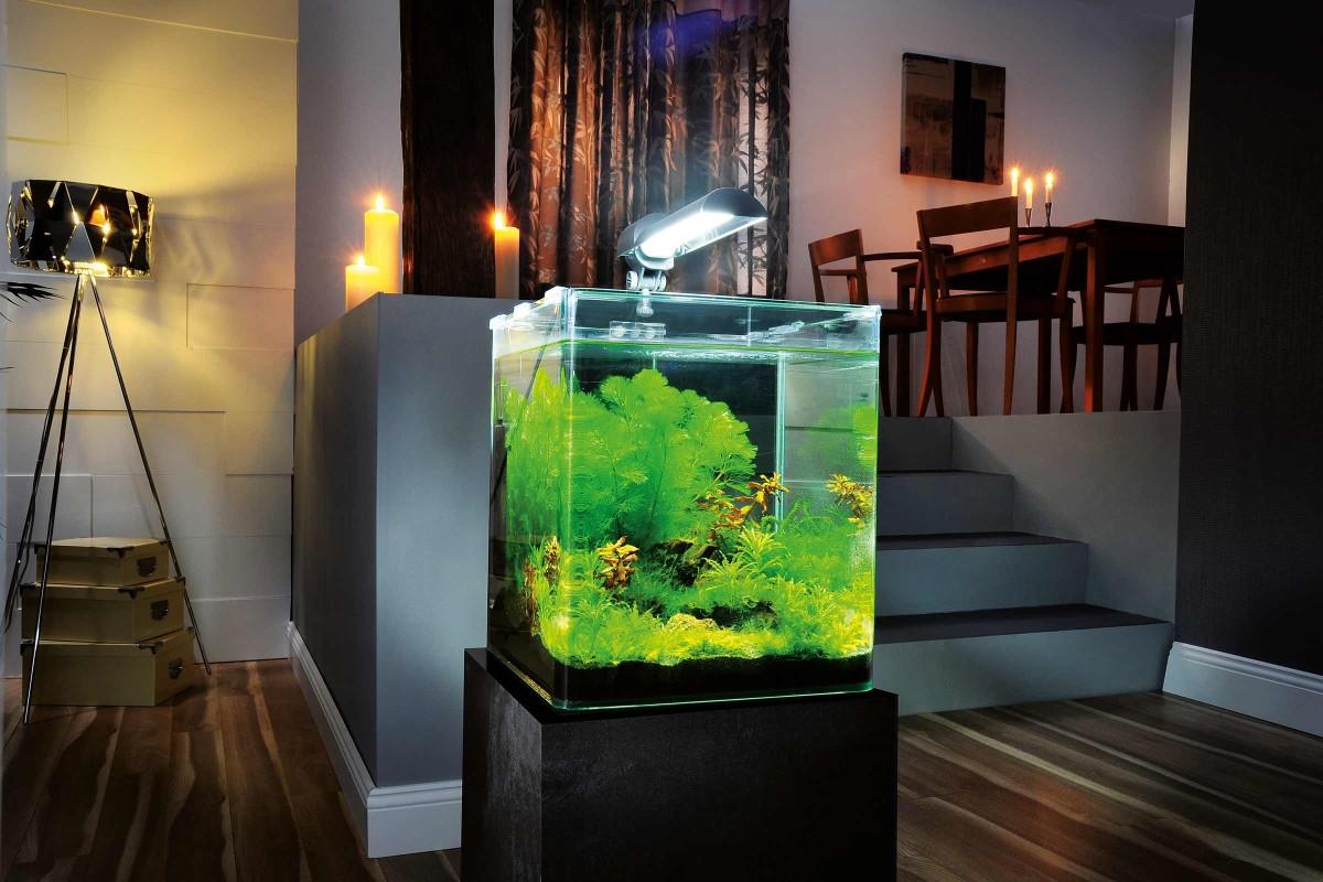 Ingrijirea acvariului nano