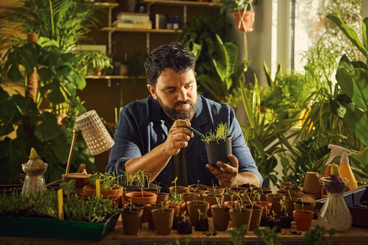 rasaduri si sadirea semintelor si bulbilor 3