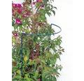 Suport arbusti si tufisuri, 100x40 cm, verde