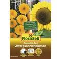 FloraSelf Set semanare floarea soarelui