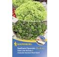 Cutie de seminte de salata Lollo si asiatica bio