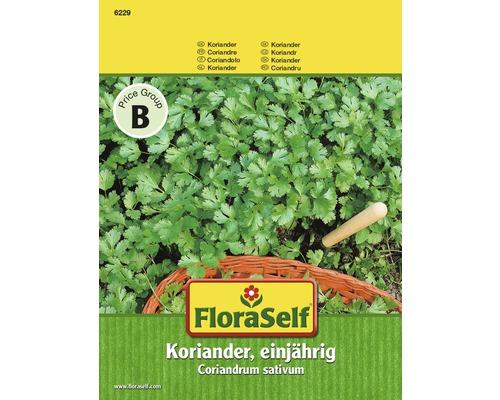 FloraSelf seminte de coriandru