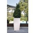 Ghiveci tip vaza Lafiora, plastic, 36x36x66 cm, alb mat, inclus set de udare a pamantului si indicator al nivelului de apa