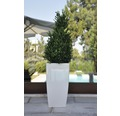 Ghiveci tip vaza Lafiora, plastic, 31x31x57 cm, alb lucios, inclus set de udare a pamantului si indicator al nivelului de apa