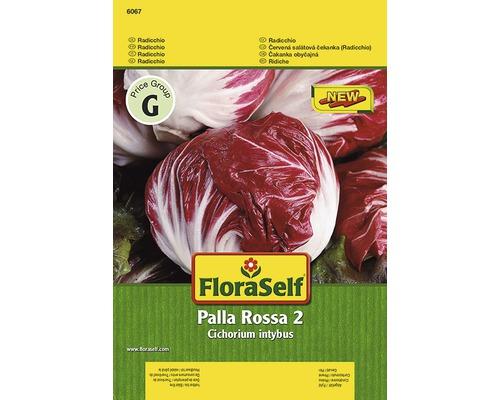 "Semințe de legume FloraSelf, radicchio ""Palla Rossa 2"""