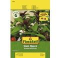 """Seminte de plante aromatice FloraSelf, busuioc """"Siam Queen"""""""