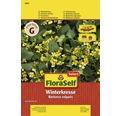Seminte de plante aromatice FloraSelf, crusatea
