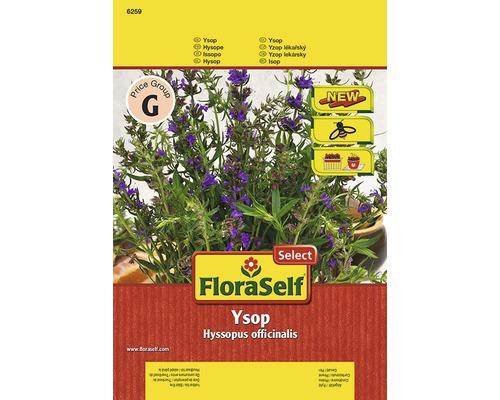 Semințe de plante aromatice FloraSelfSelect, isop