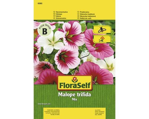 Seminte pentru flori FloraSelf, Malope trifida (nalba palnie)