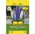 FloraSelf Seminte de flori Delphinium peren/ Nemtisori