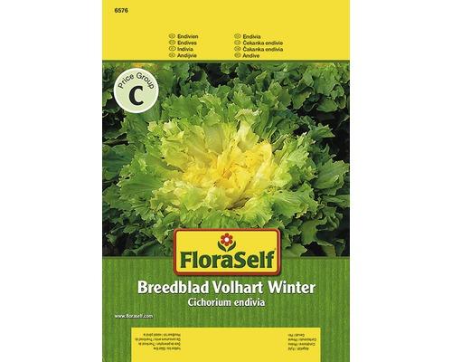 """Seminte de legume FloraSelf, andiva """"Breedblad"""""""