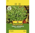 Seminte de plante aromatice FloraSelf, salvie