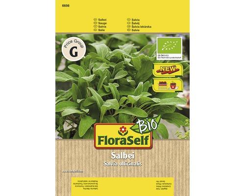 """Seminte de plante aromatice FloraSelfBio, salvie """"Salina"""""""