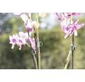 Clips orhidee FloraSelf plastic, 10 buc