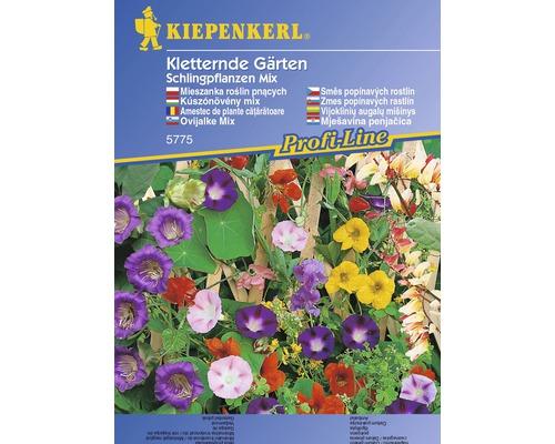 Seminte de flori cataratoare mixt