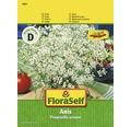 Seminte de plante aromatice FloraSelf, anason