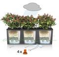 Jardiniera set Lechuza Trio Cottage cu sistem de irigare, plastic, 100x32,5x34,5 cm, gri