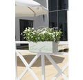 Jardiniera Lechuza Balconera Cottage, plastic, 80x19x19 cm, alba