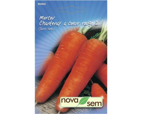 Seminte de morcov Chantenay