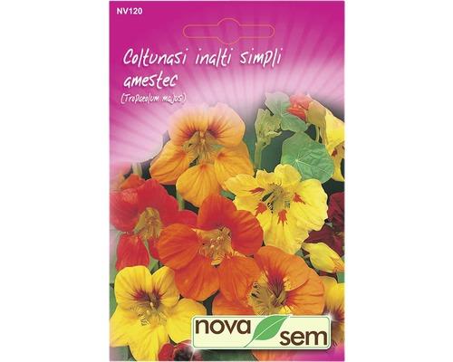 Seminte de flori Coltunasi simpli