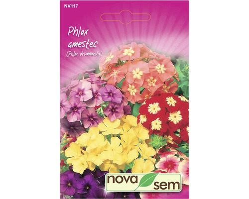 Seminte de flori Phlox