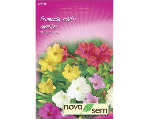 Seminte de flori Frumoasa noptii