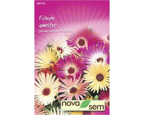 Seminte de flori Novasem Ficoide