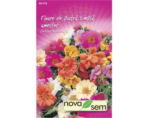 Seminte de flori Floare de piatra