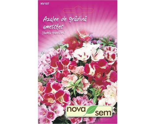 Seminte de flori Novasem Azalee de gradina