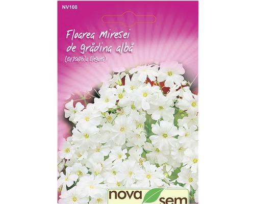 Seminte de flori Floarea miresei gradina