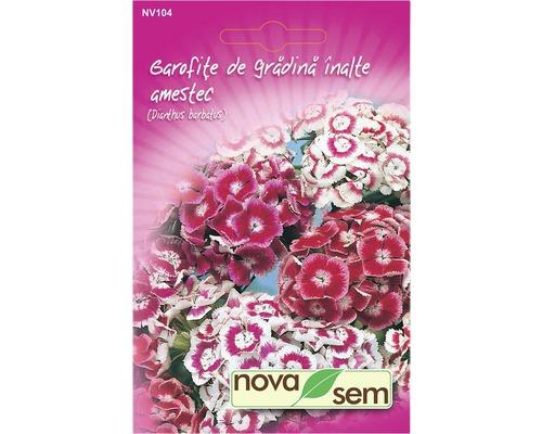 Seminte de flori Garofita