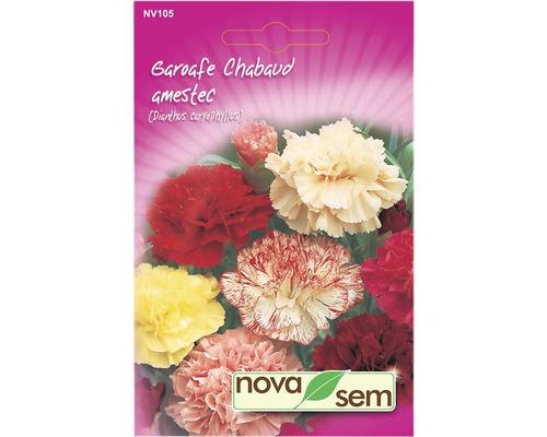 Seminte de flori Garoafe Chabaud