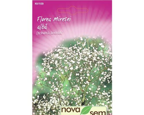 Seminte de flori Floarea miresei,alba