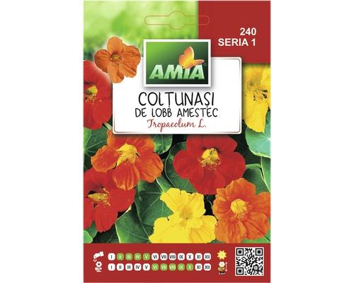 Seminte de flori Coltunasi hibrizi
