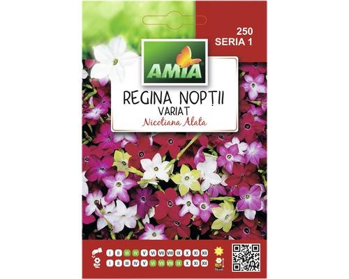 Seminte de flori Amia Regina Noptii