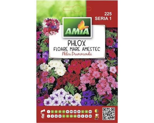 Seminte de flori Phlox floare mare