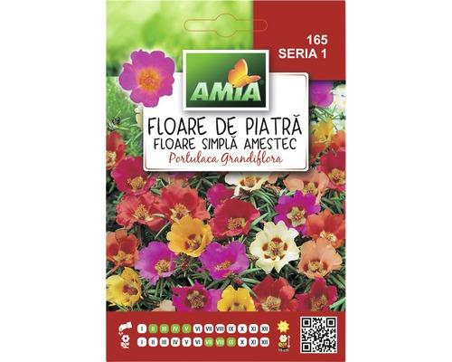 Seminte de flori Amia Floare de Piatra