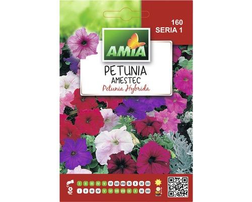 Seminte de flori Petunia hibrid