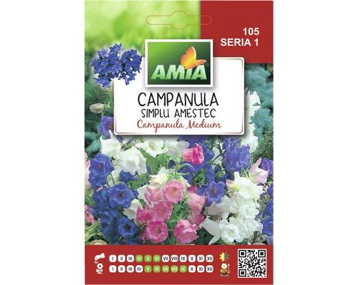Seminte de flori Campanula