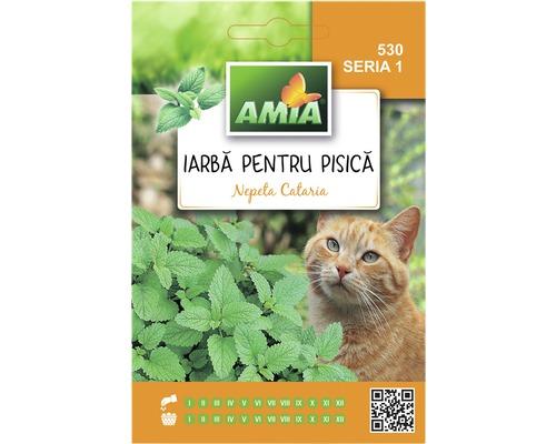 Seminte iarba pisicii