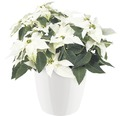 Masca pentru flori elho Brussels Diamond, plastic, Ø 25 cm, alb