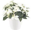 Masca pentru flori elho Brussels Diamond, plastic, Ø 30 cm, alb