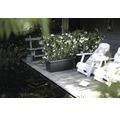 Jardiniera elho Green Basics XXL, plastic, 100x45x40 cm, negru