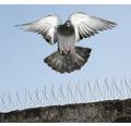 Banda antipasari Birds Off 50