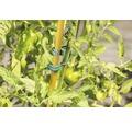 Clipsuri ajutatoare pentru plante cataratoare 5 buc