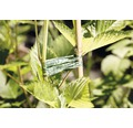 FloraSelf Rafie sintetica Reblon, 400 m, verde