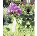 Etichetă de legat FloraSelf® 14 cm, 25 buc.