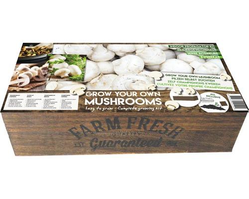 Seminte de legume Farm Fresh ciuperci Champignon albe